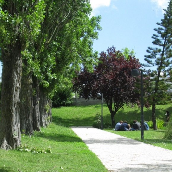 Zona de jardim, com passeio em calçada portuguesa ladeada por choupos. Fotografia com câmara baixa, tirada na Primavera, com folhas verdes. Ao fundo, grupo de estudantes sentados em círculo no relvado ao lado do passeio.